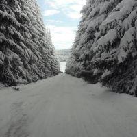 Тунел от елхи, Михайловград