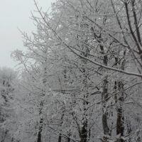 Снежно бели, Михайловград