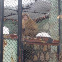 Зоологическа градина, Хасково