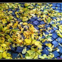 """Есен на улица Гурко /  Autumn of  street  """"Gurko"""", Велико Тарново"""