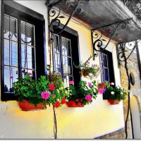 window   /   прозорецът, Велико Тарново