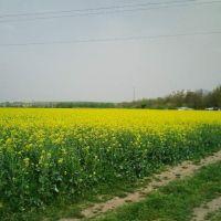 KAYACIK 2011, Димитровград