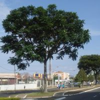 Av. Olívia Flores e árvores., Виториа-да-Конкиста
