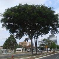 MORTO - Guapuruvú, o majestoso., Виториа-да-Конкиста