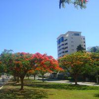Flores da Av. Brasil, Виториа-да-Конкиста