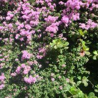 Rosa no Verde, Виториа-да-Конкиста