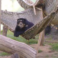 urso zoologico Ondina-Salvador, Витория