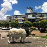 Praça Dairy dos Bois, Итапетинга