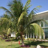 AEROPORTO DE CORUMBÁ, Корумба