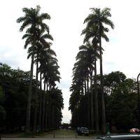 The palms of Liberdade Square, Белу-Оризонти