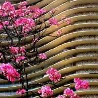 Curvas de Niemeyer, Белу-Оризонти