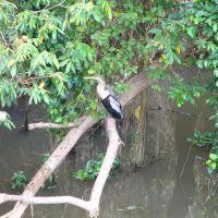 Margem do Rio Itapecerica, Дивинополис
