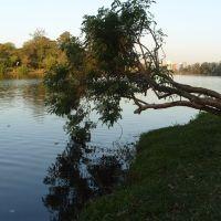 Árvore caida no lago, Лондрина