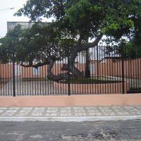 Cajueiro de Humberto de Campos, Парнаиба