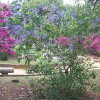 A natureza nos presenteia, Параиба-ду-Сул