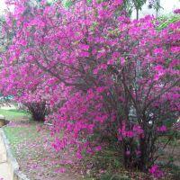 Dia de Azaleas, Параиба-ду-Сул