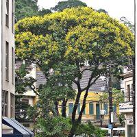 Árvore à beira do Rio Quitandinha, Петрополис