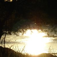 Reflexo solar entre as árvores, Моссору