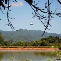 Foto feita na Propriedade de Edmar Radiske, em Linha Varzea, Paraíso do Sul - RS, Качоэйра-до-Сул