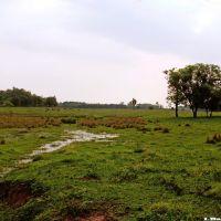 Field, Круз-Альта
