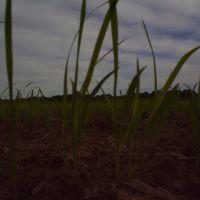 Plantação de Arroz - ERS, Сантана-до-Ливраменто