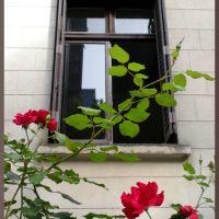 Casa das Rosas...na Avenida Paulista!, Барретос