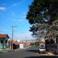 Ipê Branco na Rua N.Srª. de Fátima, Ботукату