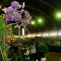 Exposição Nacional de Orquídeas de Catanduva no Colégio Nossa Senhora do Calvário - Colegião, Катандува