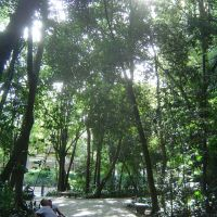 Trianon Park 3, Таубати