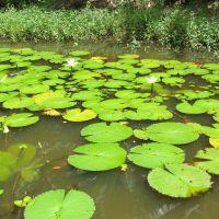 Water Garden - Guaramiranga Hills . Ceará - Brasil., Крато