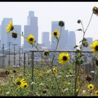 view of downtown, Лос-Анджелес