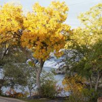 autumn leaves of Idaho Falls, Айдахо-Фоллс