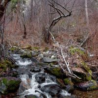 Corn Creek in thick brush (difficult traveling), Барли