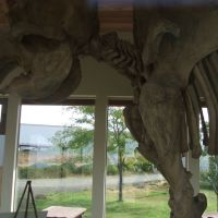 Grangeville, ID: Tolo Lake Mammoth Skeleton Replica, Eimers-Soltman Park, Барли