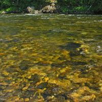 The clear waters of the Lochsa River, Барли