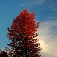 fall tree at sunset, Бойсе