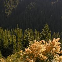 View from the Lolo Trail (route of Lewis and Clark), Маунтейн-Хоум