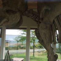 Grangeville, ID: Tolo Lake Mammoth Skeleton Replica, Eimers-Soltman Park, Монтпелье