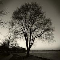 Tree next to the Mississippi, Беттендорф