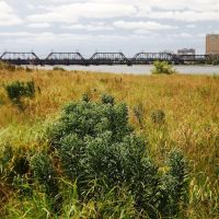 Prairie grass, Government Bridge, and Davenport, Давенпорт