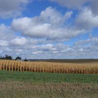 Iowa Cornfield, Денвер