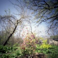 Pinhole, Iowa City, Spring 6 (2012/APR), Седар-Фоллс