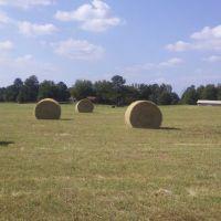 Stewart, Al hay pasture, Акрон
