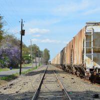 NS N-Line, Аннистон