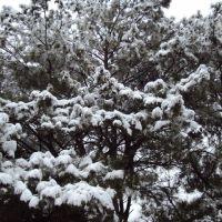 Snowy Pines, Атенс
