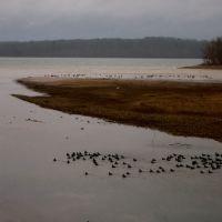 Good Day for Ducks on Pickwick Lake, Бриллиант