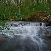 Little Stream at Joe Wheeler, Ванк