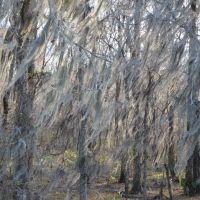 Moss Forest, Голдвилл