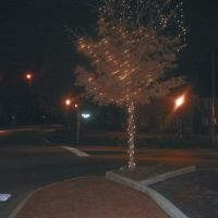 Birmingham_Alabama-2003-12-06 Tree_Lights_at_Night, Карбон Хилл
