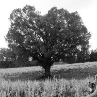 Lone Tree, Лексингтон